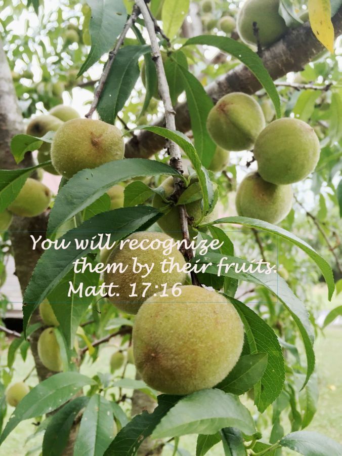 peaches with text